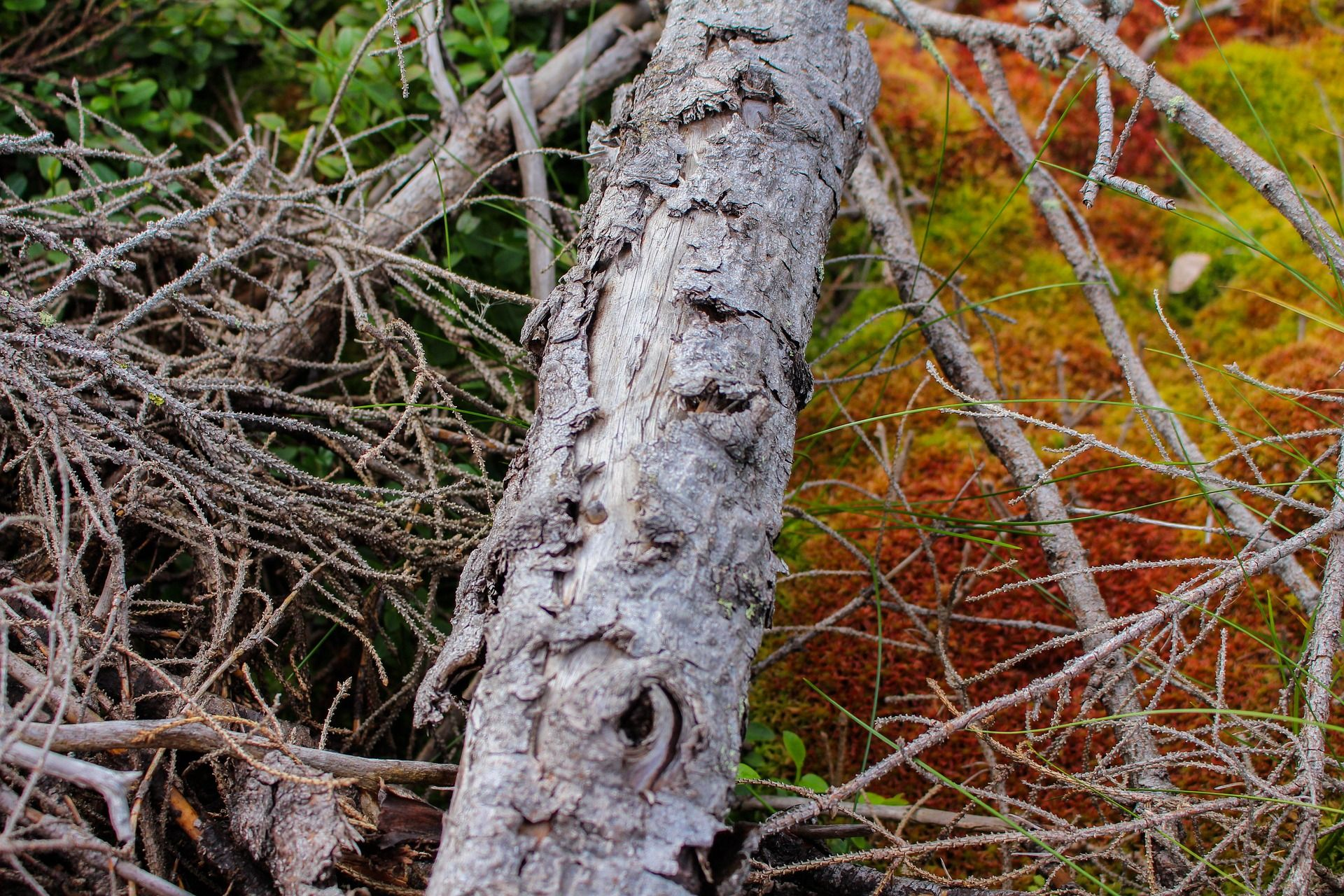 Ökosysteme hängen zusammen